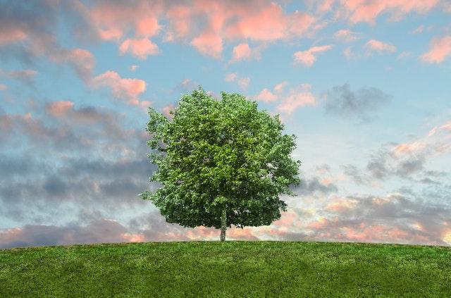 życie eko